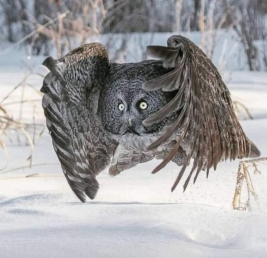 πλάσματα της φύσης....... 1