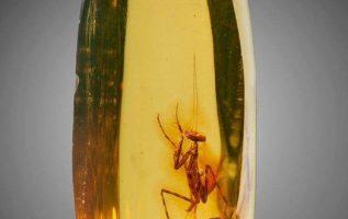 Από τα απίστευτα της φύσης,αυτό το έντομο παγιδέυτηκε σε κεχριμπάρι περιπου 12 ε... 5