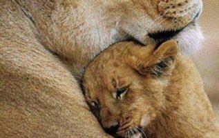 Αγκαλιάστε τα παιδάκια σας... 4