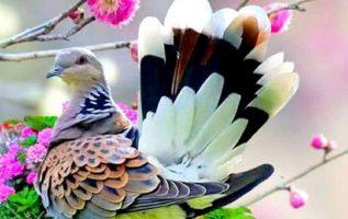 όλα τα χρώματα της φύσης επάνω του... 2