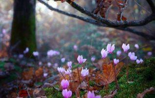 Μοναδικότητα της φύσης.!!!!... 2