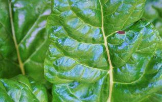 Γνωρίζετε ότι, χρησιμοποίησαν ένα φύλλο σπανάκι ως καλούπι για να καλλιεργήσουν κύ... 6