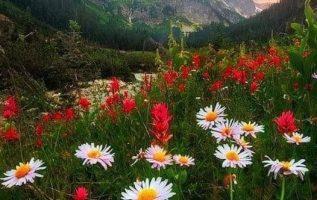 Beautiful nature... 5
