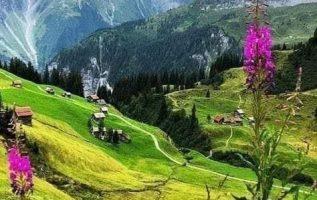 Wonderful Nature... 6