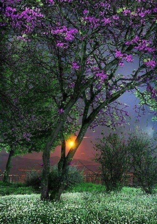 Beautiful peaceful... 1