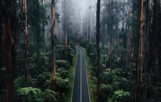 A forest fit for a mysterious fairy tale Black Spur, Australia... 4