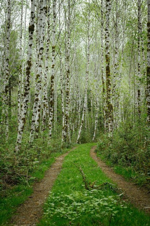 Amazing Birch Grove... 1