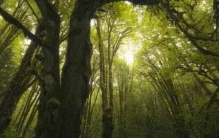 Ancient Dence Forest in vancouver Iceland... 2