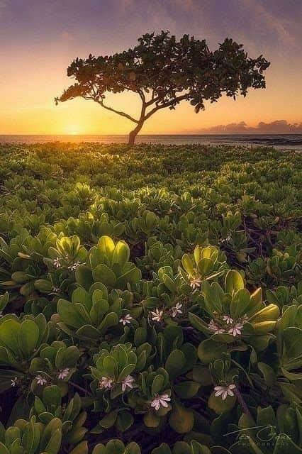 Beautiful peaceful Nature... 1