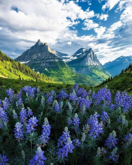 Glacier National Park in the United States is located in Montana, on the border ... 1