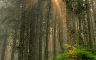 Light Rays in Siuslaw National Forest, Oregon #NaturalbeautyoftheEarth... 5