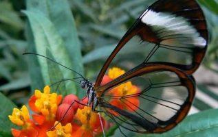 Διάφανες πεταλούδες... 6