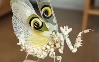 Ένα έντομο σαν πεταλούδα...