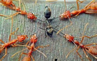 Αν μαζέψεις 100 μαύρα μυρμήγκια και 100 κόκκινα μυρμήγκια και τα βάλεις μαζί σε ...