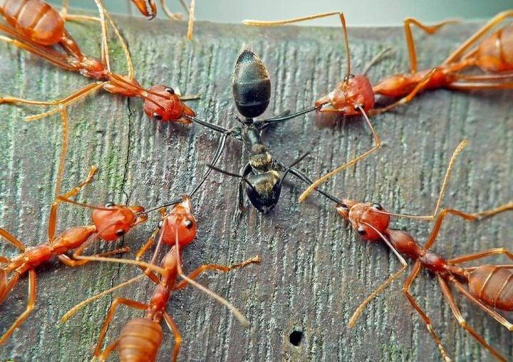 Αν μαζέψεις 100 μαύρα μυρμήγκια και 100 κόκκινα μυρμήγκια και τα βάλεις μαζί σε ... 1
