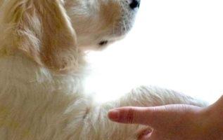 Ευλογημένα είναι τα ζώα: χρειάζεται μόνο να είναι ο εαυτός τους για να αγαπηθούν...