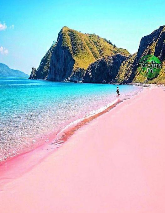 Η ροζ παραλία του Komodo Ινδονησία , είναι μία από τις επτά ροζ παραλίες άμμου σ... 1