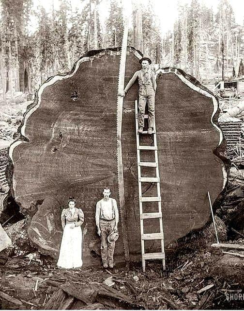 Ιστορική φωτογραφία του1892.... 1