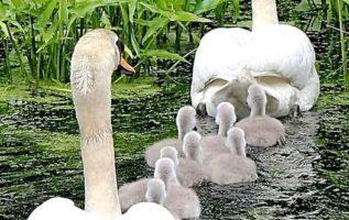 Κυριακάτικη οικογενειακή βόλτα...