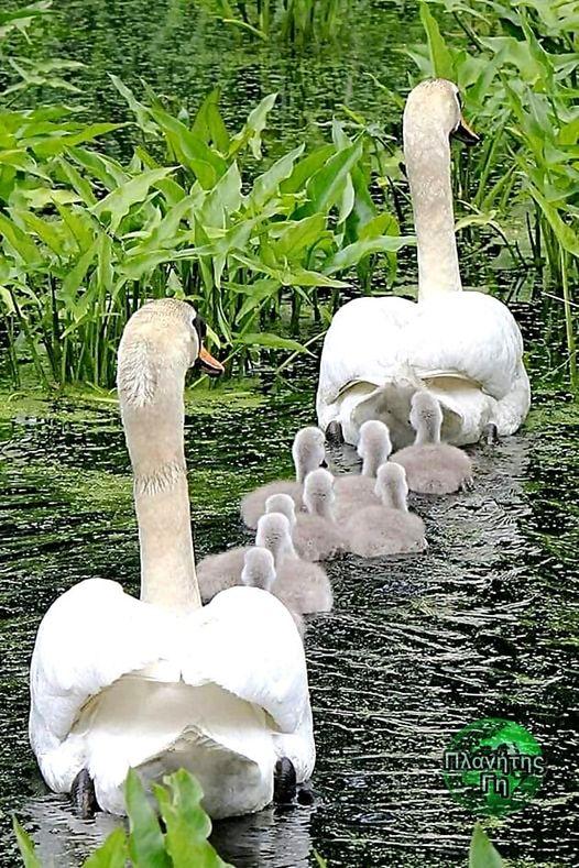 Κυριακάτικη οικογενειακή βόλτα... 1