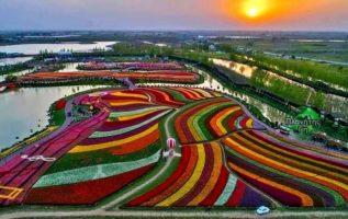 Λιβάδια τουλίπας στη Ολλανδία...