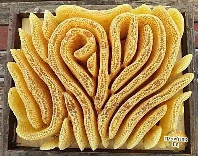 Μελισσοκόμος που ξέχασε να βάλει σκελετό στην κυψέλη έμεινε έκπληκτος, οι μέλισσ... 1