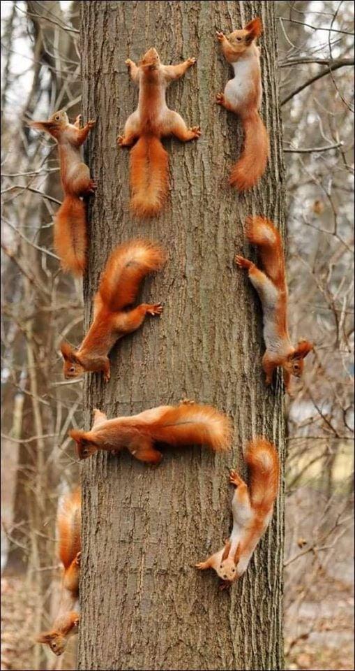Μην κόβετε τα δέντρα...μην καίτε τα δάση... 1