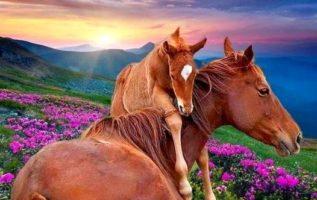 Μητέρα και παιδί....πόση ομορφιά...