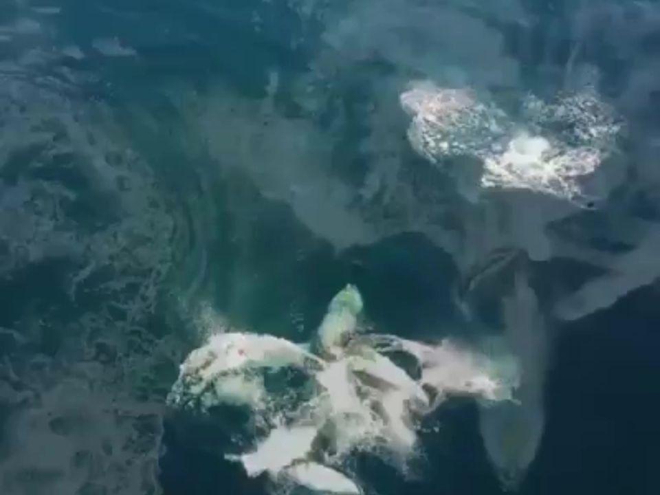 Παγκόσμια Ημέρα των Ωκεανών Σήμερα...οι χορευτές... 1