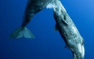 Το γάλα φάλαινας είναι παχύρευστο σαν  οδοντόπαστα, με...