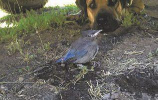 Φύλαγε ένα πουλί με τραυματισμένη  φτερούγα κάτω από το φορτηγό μου για τέσσερις...