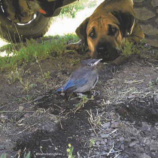 Φύλαγε ένα πουλί με τραυματισμένη φτερούγα κάτω από το φορτηγό μου για τέσσερις... 1