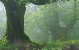 Φύση  Μας μαγεύεις και μας ηρεμείς...