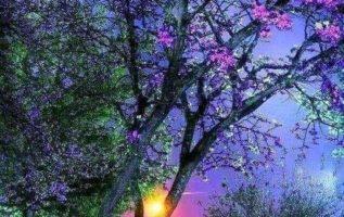 ′ Σκέψου όλη την ομορφιά που έχει μείνει ακόμα γύρω σου...