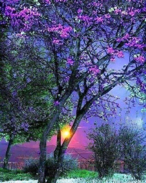 ′ Σκέψου όλη την ομορφιά που έχει μείνει ακόμα γύρω σου... 1