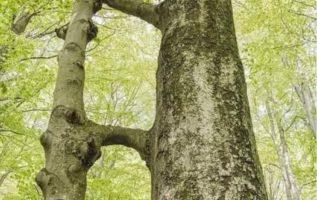 Αυτή η εικόνα είναι από το Εθνικό Πάρκο Beck (Ουγγαρία). Ένα μάθημα για το τι ση...