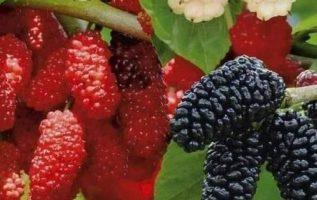 Ποιος έτρωγε αυτά τα όμορφα φρούτα παιδί υπέροχα απλά τέλεια και πολύ νοστημα φρ...