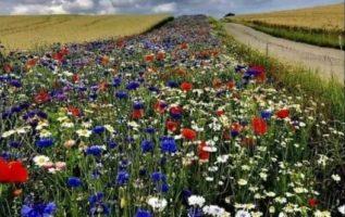 Στη Δανία, ο νόμος υποχρεώνει τους μεγάλους αγροτικούς ιδιοκτήτες να φυτεύουν το...
