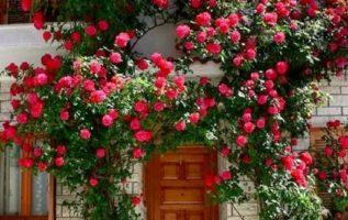 υπέροχη είσοδος...