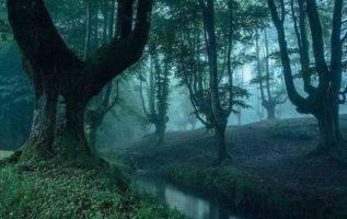 Otzarreta Forest in Spain...