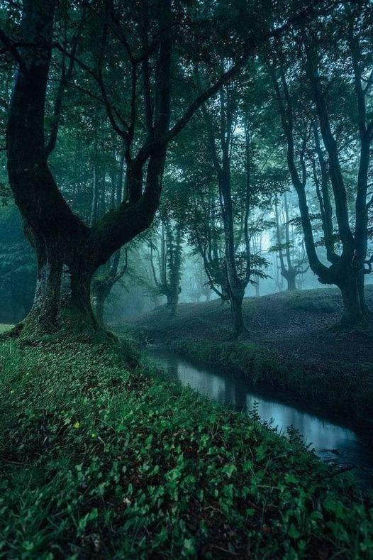 Otzarreta Forest in Spain... 1