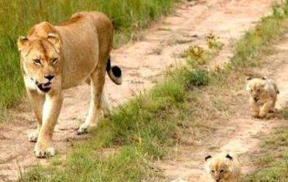 Βόλτα με τη μαμά...