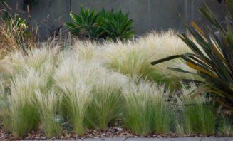 Σύνθεση με Στύπα!! Εντυπωσιακό φυτό.!...