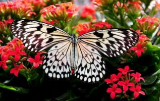 Butterfly with a Kalanchoe!!!!...