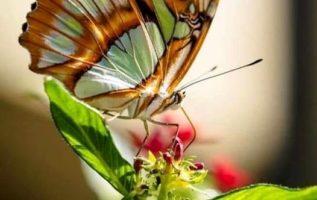 Όλα μπορούν να αλλάξουν στη ζωή, όλα μπορούν να βελτιωθούν και να μεταμορφωθούν ...