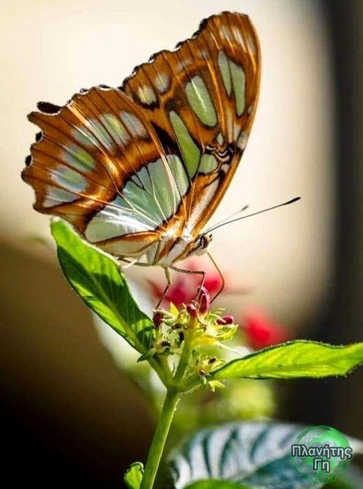 Όλα μπορούν να αλλάξουν στη ζωή, όλα μπορούν να βελτιωθούν και να μεταμορφωθούν ... 1