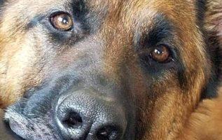 Όταν κοιτάζω στα μάτια ένα ζώο , βλέπω μια ψυχή .......