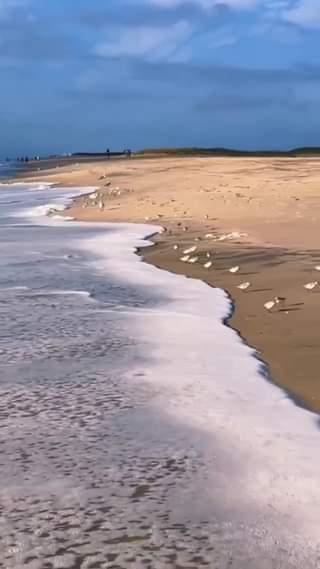 Ακόμα και τα πουλιά λατρεύουν να παίζουν με τα κύματα... 1