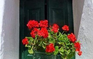 """""""Αν μπορούσαμε να δούμε καθαρά το θαύμα ενός και μόνο λουλουδιού, όλη μας η ζωή ..."""