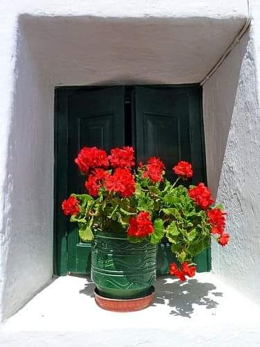 """""""Αν μπορούσαμε να δούμε καθαρά το θαύμα ενός και μόνο λουλουδιού, όλη μας η ζωή ... 1"""